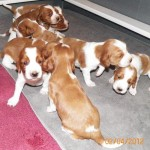 120204puppiesplaying