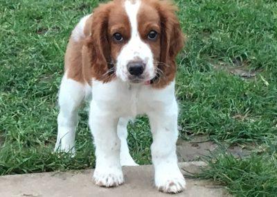 1812 - Millie-pup