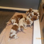 puppies on the go 2